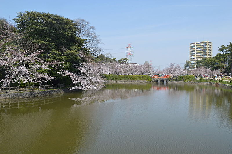 kariya_kijo_park_cherry_blossom-b